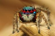 色彩斑斓的蜘蛛图片(11张)