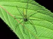 各种昆虫图片(20张)