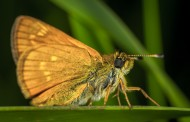 毛绒绒的飞蛾图片(10张)