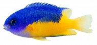 观赏鱼特写图片(215张)