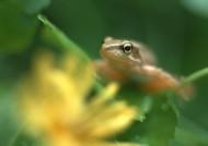 可爱青蛙和植物图片(8张)