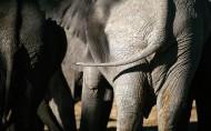 大象图片(20张)