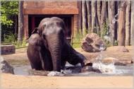 正在洗澡的大象图片(17张)