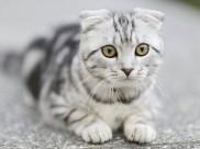 趴在地上的猫咪图片(10张)