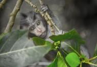 灰色的猴子图片(10张)