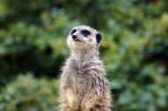 可爱淘气的鼠鼬图片(14张)