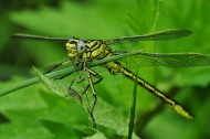 蜻蜓高清图片(15张)