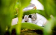 猫咪图片(20张)