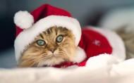 戴圣诞帽的小猫小狗图片(9张)