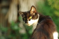 爬树的猫咪图片(13张)