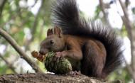 灰松鼠图片(8张)