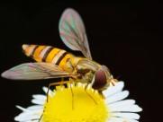 蜜蜂图片(8张)
