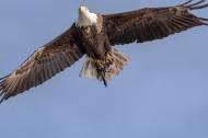 老鹰图片(8张)