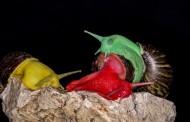 彩色蜗牛图片(7张)