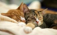 呆萌可爱的猫咪图片(13张)