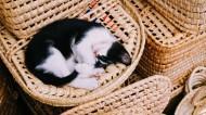 躺着睡觉的小猫图片(17张)