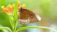 蝴蝶图片(11张)