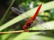 停歇的蜻蜓图片(11张)