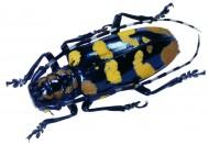 昆虫图片(66张)