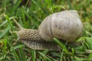 户外蜗牛特写图片(7张)