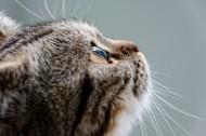 猫咪的侧脸特写图片(10张)