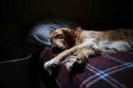 躺着的宠物狗图片(18张)