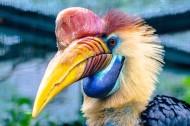 奇特珍贵的犀鸟图片(18张)