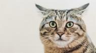 呆萌猫咪图片(9张)