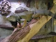 蜥蜴图片(21张)