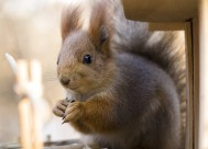 可爱的松鼠图片(10张)