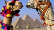 可爱的骆驼图片(11张)