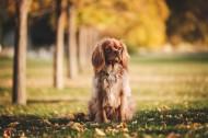 坐着的狗狗图片(14张)