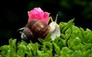 蜗牛图片(6张)
