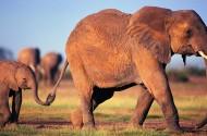 大象图片(24张)
