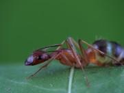 蚂蚁图片(8张)