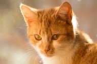 猫咪图片(8张)