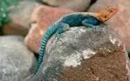 蜥蜴图片(19张)