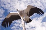 犀利的老鹰写真图片(15张)