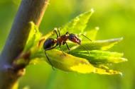 蚂蚁高清图片(15张)
