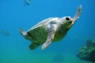 乌龟高清图片(15张)