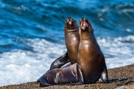 海狮与海龟的图片(15张)