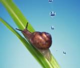 可爱小蜗牛图片(6张)