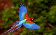 金刚鹦鹉图片(9张)