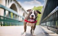 可爱的狗狗微笑图片(23张)