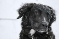 可爱的黑狗图片(12张)