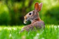 好看的兔子图片(12张)
