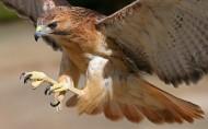 野生鸟类图片(24张)