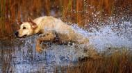 水中奔跑的狗狗图片(12张)