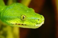 冰冷危险的蛇图片(14张)