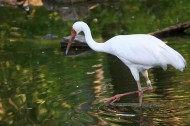 白鹤图片(7张)
